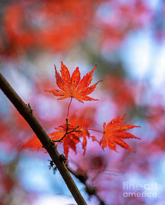 Royalty-Free and Rights-Managed Images - Fall Colors Last of the Leaves by Mike Reid