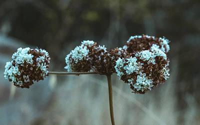 Photo Royalty Free Images - Fall Flowers Royalty-Free Image by Martin Alonso