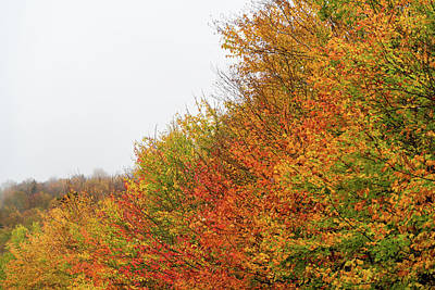 Photograph - Fall Foliage against an Overcast Sky by William Dickman