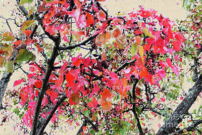 Old Masters - Fall Foliage Painted by Bentley Davis