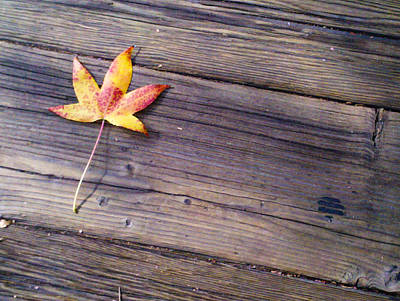 Photograph - Fall Leaf on Wood Planks by Bonny Puckett