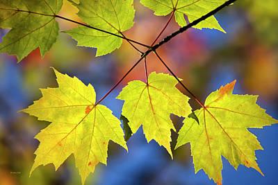 Pasta Al Dente - Fall Maple Leaves by Christina Rollo
