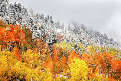 Photograph - Fall to Winter Canvas Print, Photographic Print, Art Print, Framed Print, Greeting Card, iPhone Case by David Millenheft