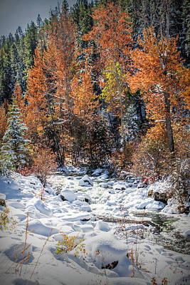 Venice Beach Bungalow - Fall to Winter in October in Yellowstone National Park by Randall Nyhof