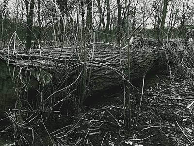 Photograph - Fallen Tree in Tiergarten Berlin, Black and White Photography by Sean Patrick Durham