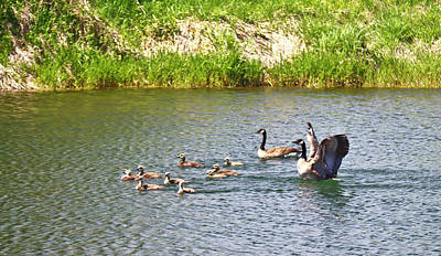 All Black On Trend - Family Of Canada Geese by Joyce Dickens