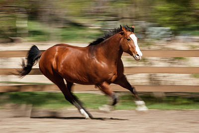 Photograph - Fast Horse by Shelley Paulson