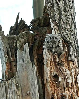 Vintage Baseball Players - Father screech owl  by Heather King