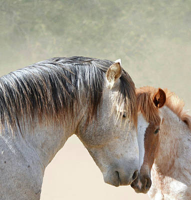 Photograph - Father Son Stallion Love by Barbara Sophia Travels