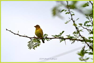 A White Christmas Cityscape - Female Weaver bird  by Sonali Gangane