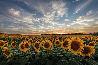 Scott Bean Rights Managed Images - Field of Gold Royalty-Free Image by Scott Bean