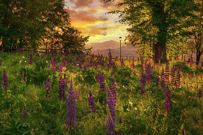 Kitchen Spices And Herbs - Field of Lupin Dreams by Joann Vitali
