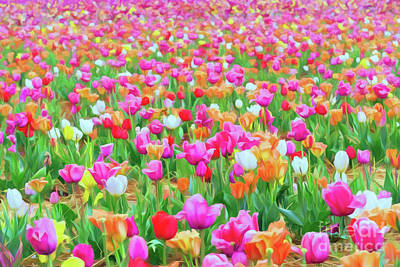 Popstar And Musician Paintings - Field of Tulips by Ava Reaves