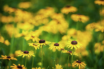 Audrey Hepburn - Fields of Yellow by Andrew Soundarajan