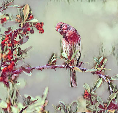 Animals Royalty-Free and Rights-Managed Images - Finch on Red Berry Bush 2 in Cranberry Abstract by Linda Brody