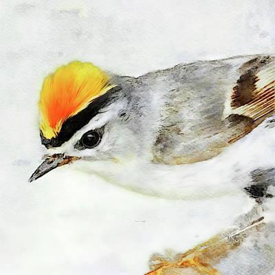 Painting - Firecrest Bird by Russ Harris