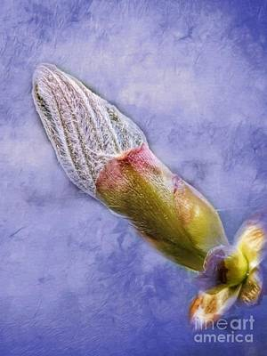 Beastie Boys - First Bud Of Spring by Abbie Shores