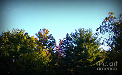 Frank J Casella Royalty-Free and Rights-Managed Images - First Signs of Fall by Frank J Casella