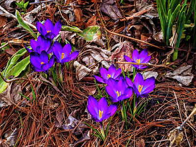Photograph - First signs of Spring by Louis Dallara