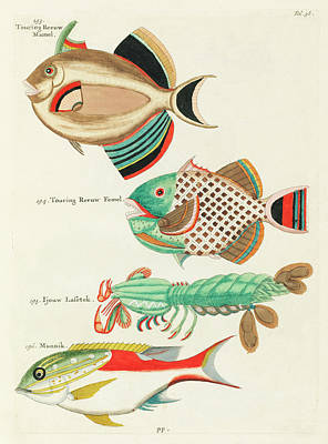 The Champagne Collection -  fishes found in Moluccasdast Indies by L by Celestial Images