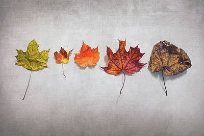 Marvelous Marble Rights Managed Images - Five Autumn Leaves Royalty-Free Image by Scott Norris