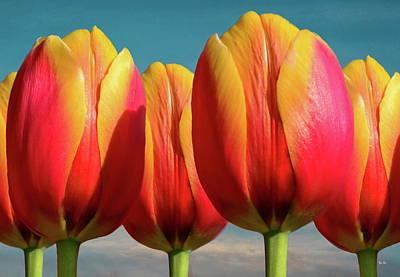 Photograph - Five Calypso Tulips by Russ Harris