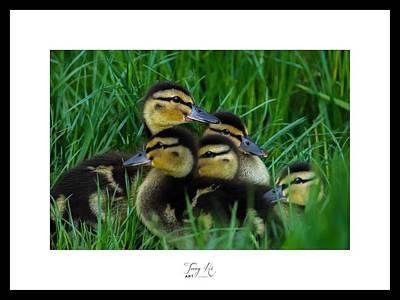 Animals Digital Art - Five Ducklings by Terry Hi