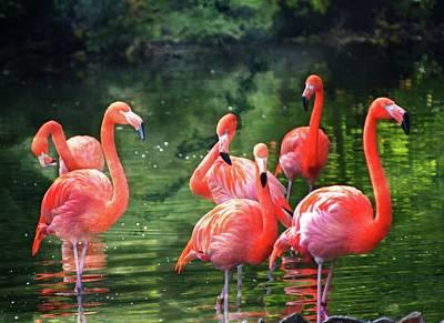 Animals Photos - Flamingos 10 by Marty Koch