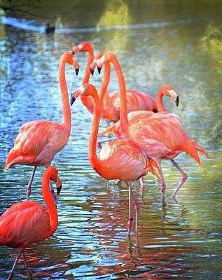 Animals Photos - Flamingos 11 by Marty Koch