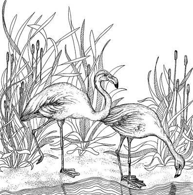 Animals Drawings - Flamingos  by Jennifer Wheatley Wolf
