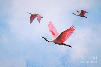 Modern Sophistication Beaches And Waves - Flight Of The Roseate Spoonbill by Diann Fisher