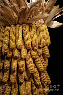 Photograph - Flint Corn by Lois Bryan