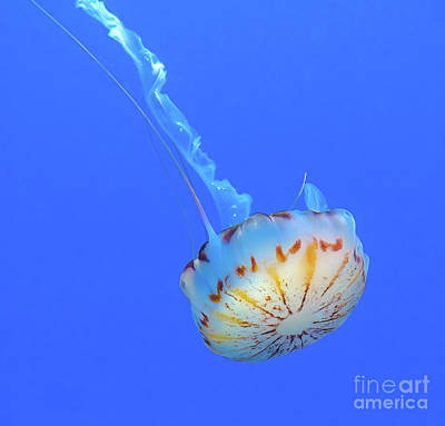 Spot Of Tea Royalty Free Images - Floating Jellyfish Royalty-Free Image by Ava Reaves
