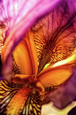 Surrealism Royalty-Free and Rights-Managed Images - Floral Deep Dive by David Beard
