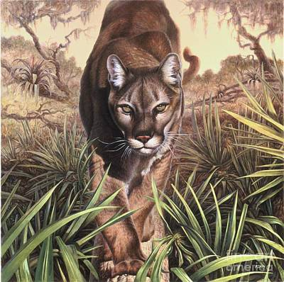 Animals Paintings - Florida Panther by Hans Droog