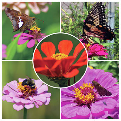 Royalty-Free and Rights-Managed Images - Flower Collage 7-26 by Greg Joens