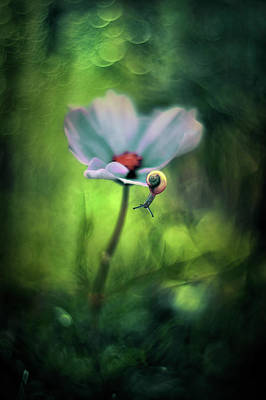 Surrealism Royalty-Free and Rights-Managed Images - Flower cosmos by Iwona Sikorska