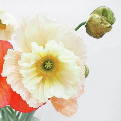 Photograph - Flower Photo by Steve Tobus by Steve Tobus