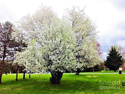 When Life Gives You Lemons - Flowering Pear tree by Debra Lynch