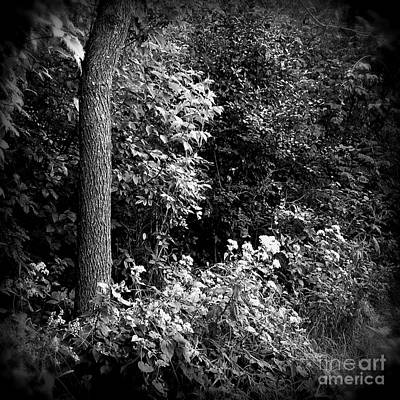 Frank J Casella Royalty-Free and Rights-Managed Images - Flowers Along The Trail - Holga Effect by Frank J Casella