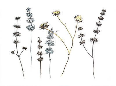 Rolling Stone Magazine Covers - Flowers and Seed heads by Luisa Millicent