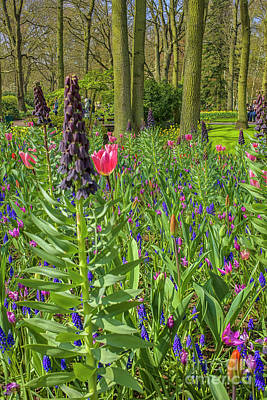 Granger - Flowers in all colors at the Keukenhof by Patricia Hofmeester
