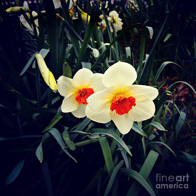 Frank J Casella Royalty-Free and Rights-Managed Images - Flowers in the Field by Frank J Casella