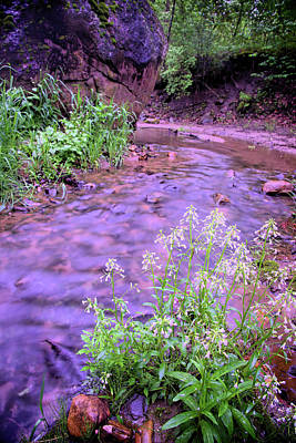 Photograph - Flowers in the Stream by Bonfire Photography
