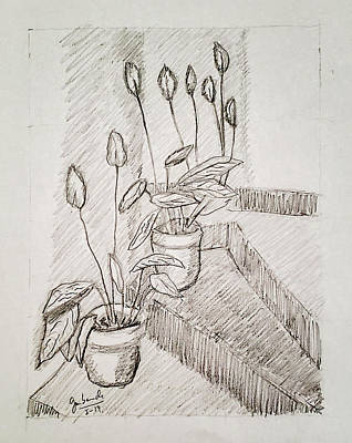Still Life Drawings - Flowers by Jose Luis Gambande