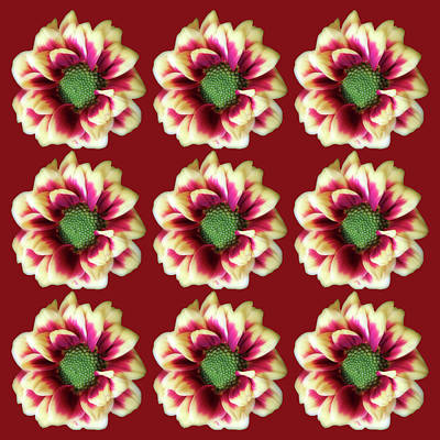Bath Time Rights Managed Images - Flowers On Red Collage Royalty-Free Image by Johanna Hurmerinta