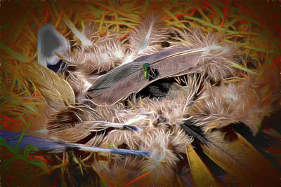Rights Managed Images - Fly on a Pile of Feathers   Artistic Royalty-Free Image by Linda Brody
