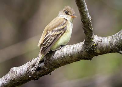 Photograph - Flycatcher in the Park by Ricky L Jones