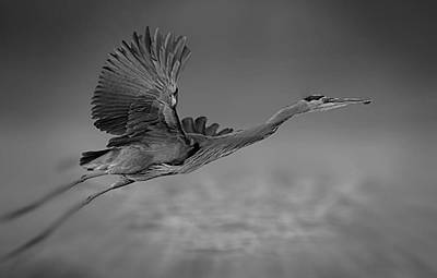 Mixed Media - Flying Heron by Marvin Blaine