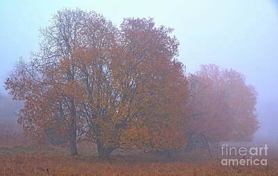 Latidude Image - Fog 9 by Esko Lindell